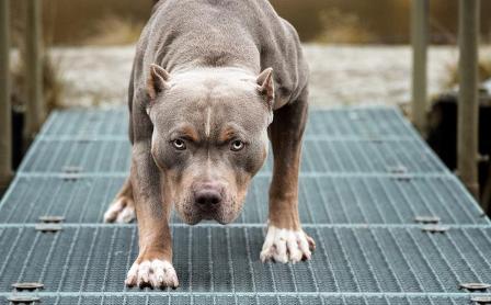 Dueno-de-perros-acusado-de-homicidio-por-la-muerte