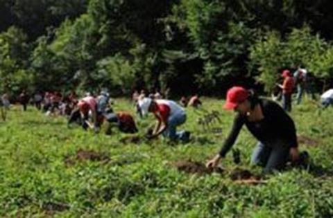 Anuncian-medidas--drasticas--para-reforestar-las-areas-incendiadas-en-Bolivia