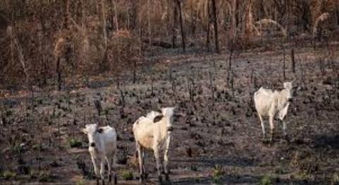 Alcaldes-de-la-Chiquitania-piden-agua-por-el-incendio-y-la-sequia