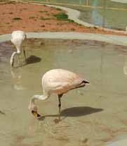 Convenio-para-el-resguardo-de-la-fauna