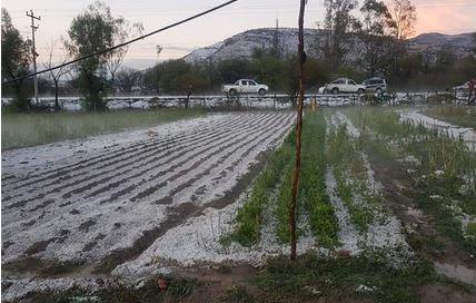 Granizada-causa-perdida-de-cultivos-agricolas-en-comunidades-de-Tarija-