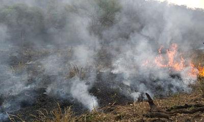 Se-mantienen-los-18-incendios-forestales-activos-en-cinco-municipios-de-Santa-Cruz