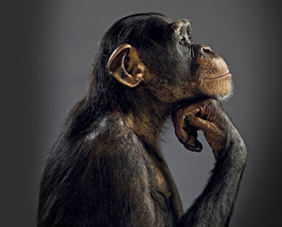 Teoria-de-la-evolucion-de-Darwin:-por-que-es-incorrecto-decir-que--descendemos-de-los-monos-