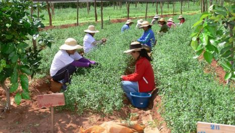 Gobierno-prepara-decreto-para-facilitar-creditos-blandos-a-pequenos-productores