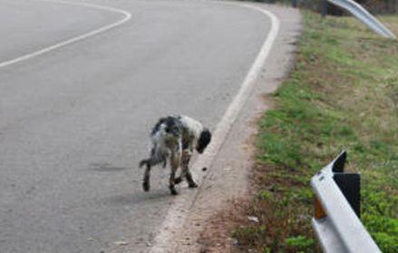 En-Tarija-piden-ley-para-sancionar-abandono-de-animales-en-carreteras