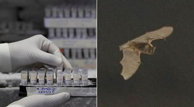 Cientificos-descubren-6-nuevos-coronavirus-en-murcielagos