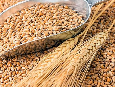 Gobierno-suspende-aranceles-para-la-importacion-de-trigo