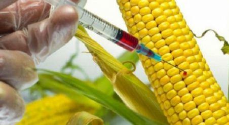 Presidente-de-IBCE-dice-que-uso-de-semillas-transgenicas-viene-desde-el-2005