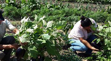 Expertos:-Es-la-gran-oportunidad-para-expandir-la-produccion-interna-y-externa-de-la-agricultura-familiar-campesina