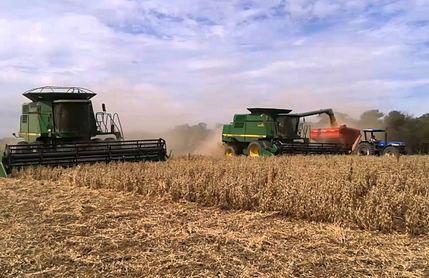 Productores-de-granos-se-declaran-en-quiebra-por-paralizacion-de-actividades