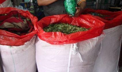 Productores-de-los-Yungas-piden-flexibilizacion-para-el-comercio-de-coca
