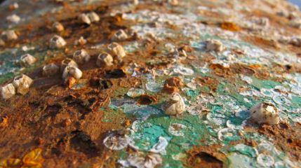 Cientificos-estadounidenses-descubren--accidentalmente--dos-bacterias-que-comen-metales