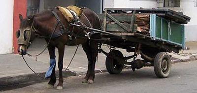 Alcaldia-de-Santa-Cruz-prohibe-el-uso-de-carrozas-jaladas-por-caballos
