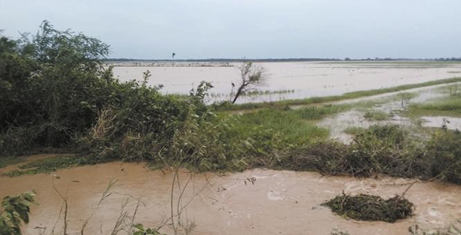 Inundacion-afecta-7.000--hectareas-de-soya-