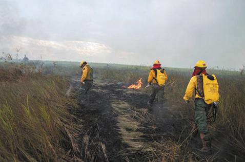 Presidenta-Ánez-asegura-que-el-Gobierno-no-escatimara-recursos-para-evitar-incendios