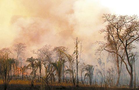Ayuda-internacional-por-incendios-forestales