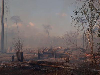 Gobierno-detecta-varios-asentamientos-ilegales-en-zonas-afectadas-por-los-incendios