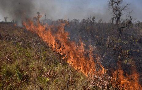 Registran-17-incendios-forestales-en-el-departamento-de-Santa-Cruz