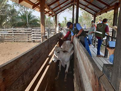 Inician-la-temporada-de-vacunacion-contra-la-Fiebre-Aftosa-en-Santa-Cruz