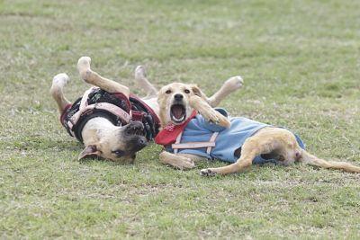 Albergue-Municipal-de-animales-abre-su-Feria-de-Adopcion-de-perros-y-gatos